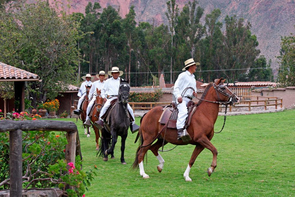 exhibicion-caballos-peruanos-paso